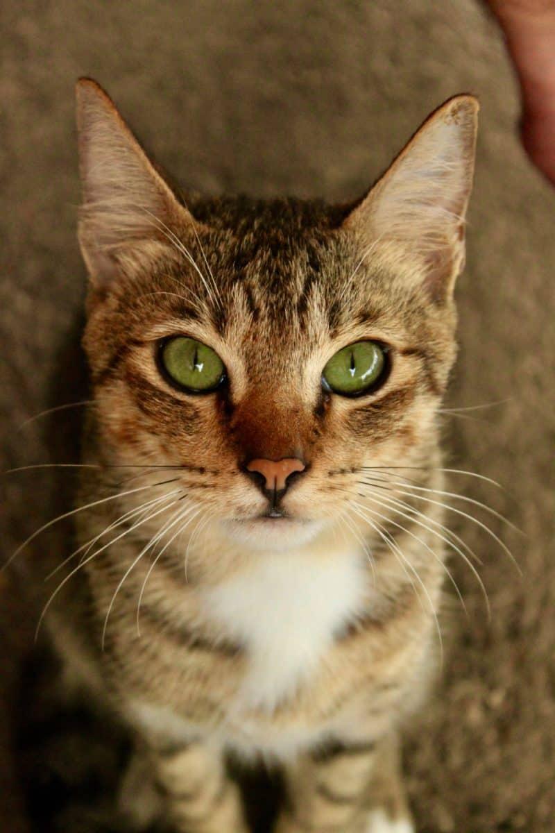 boracay cat