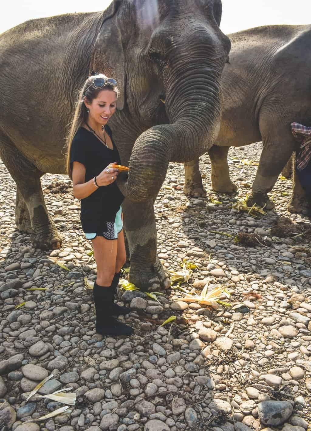 Meeting the elephants at Mandalao Elephant Sanctuary
