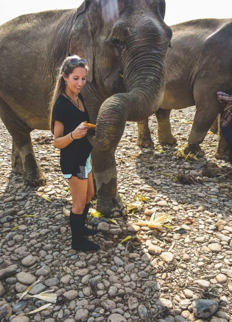 Meeting the elephants at Mandalao Elephant Sanctuary