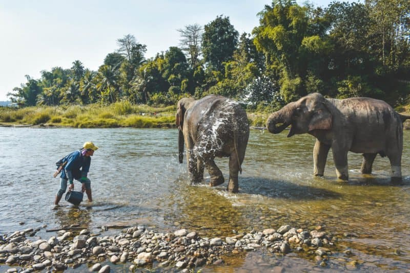 Ethical Elephant Experience in Luang Prabang, Laos: MandaLao Elephant Conservation