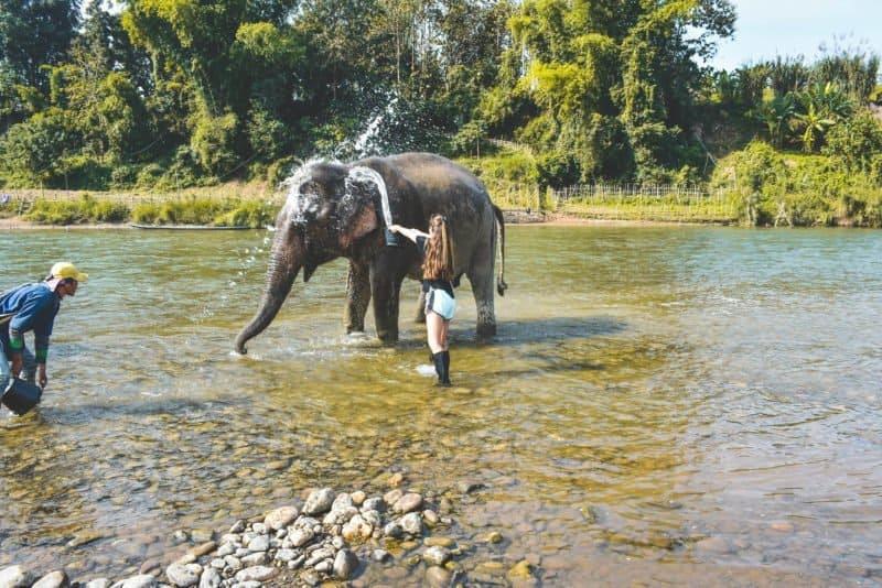 Elephant encounter at Mandalao
