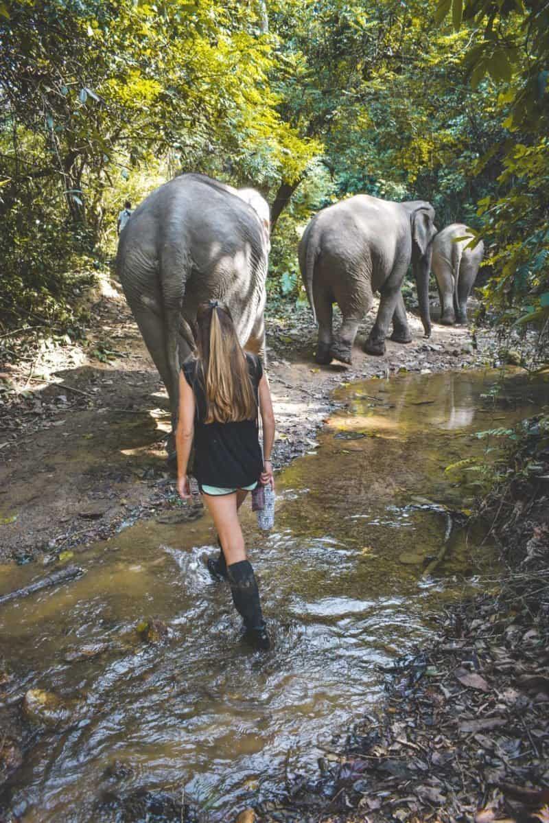 mandalao ethical elephant experience laos