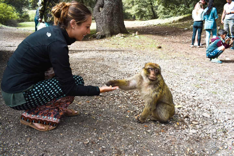 Feeding the monkeys in Azrou, Morocco