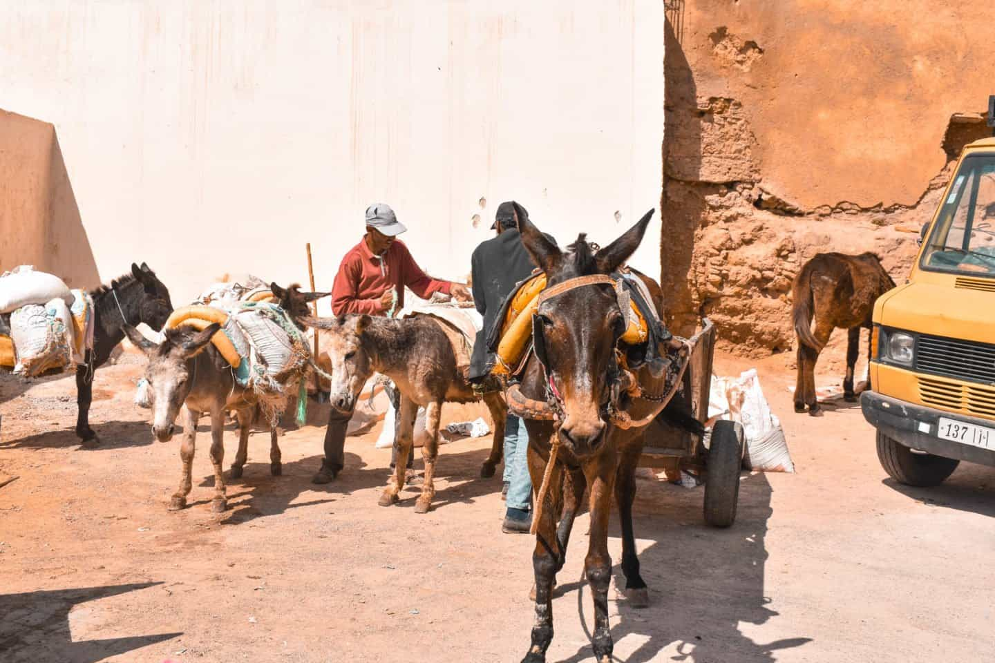 what to do Fes Morocco