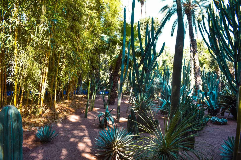 Visiting Le Jardin Majorelle in Marrakech