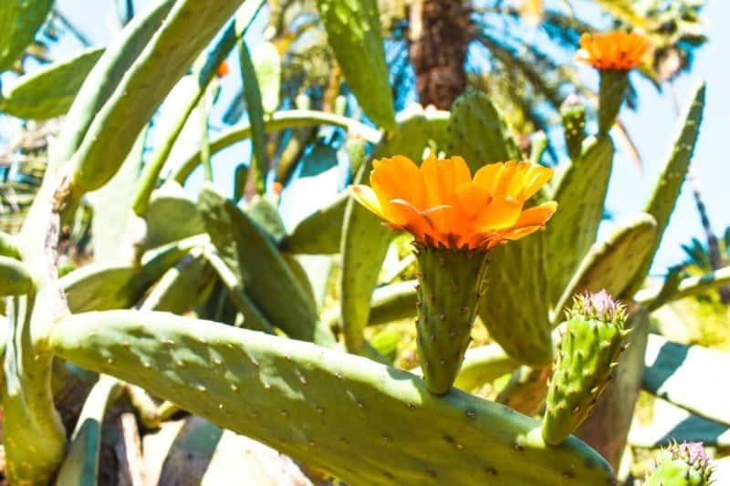 Visiting Le Jardin Majorelle Marrakech