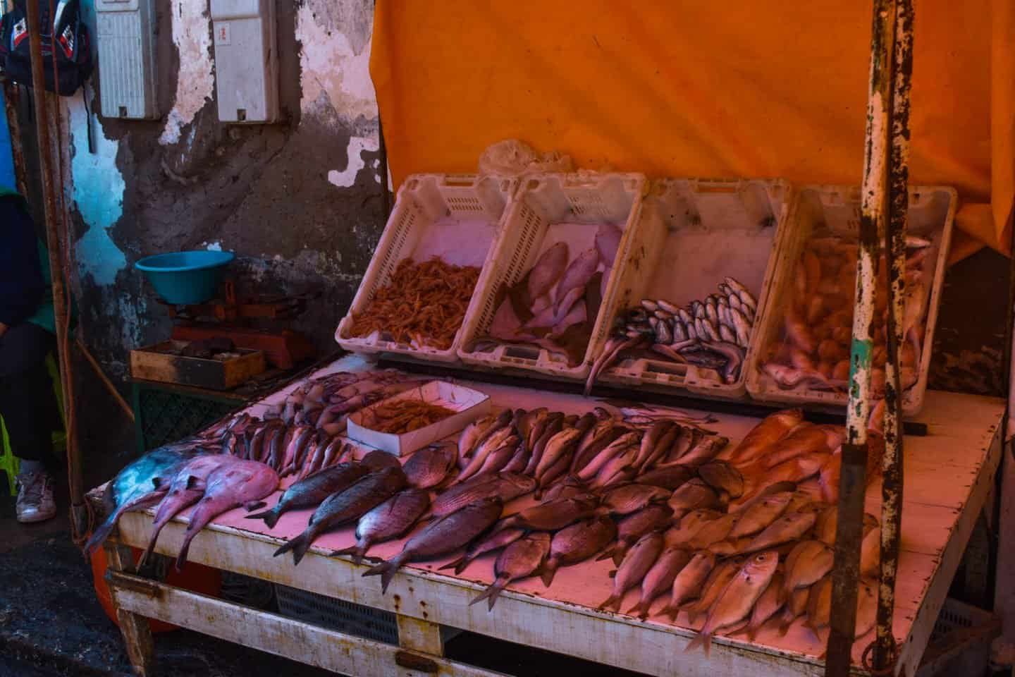 buying fish in the port in Essaouira