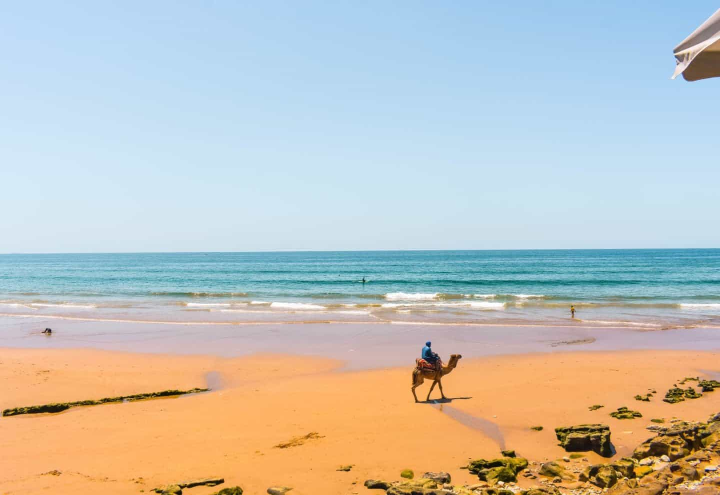 camels on Taghazout beach