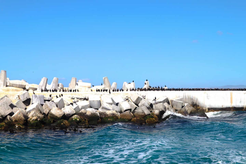 Arriving on Robben Island