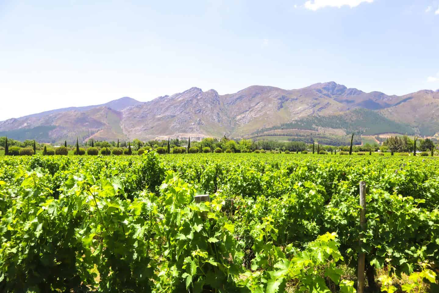 day trips from Cape Town