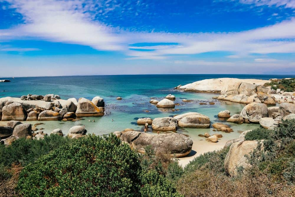 penguin beach in cape town