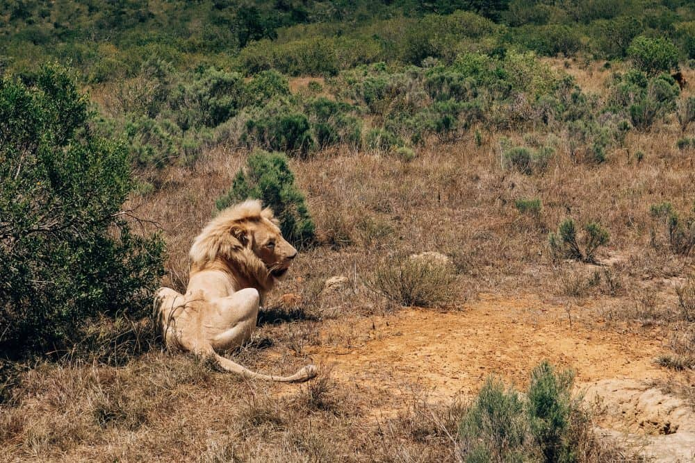 10 of the Best Places for a Safari in Southern Africa
