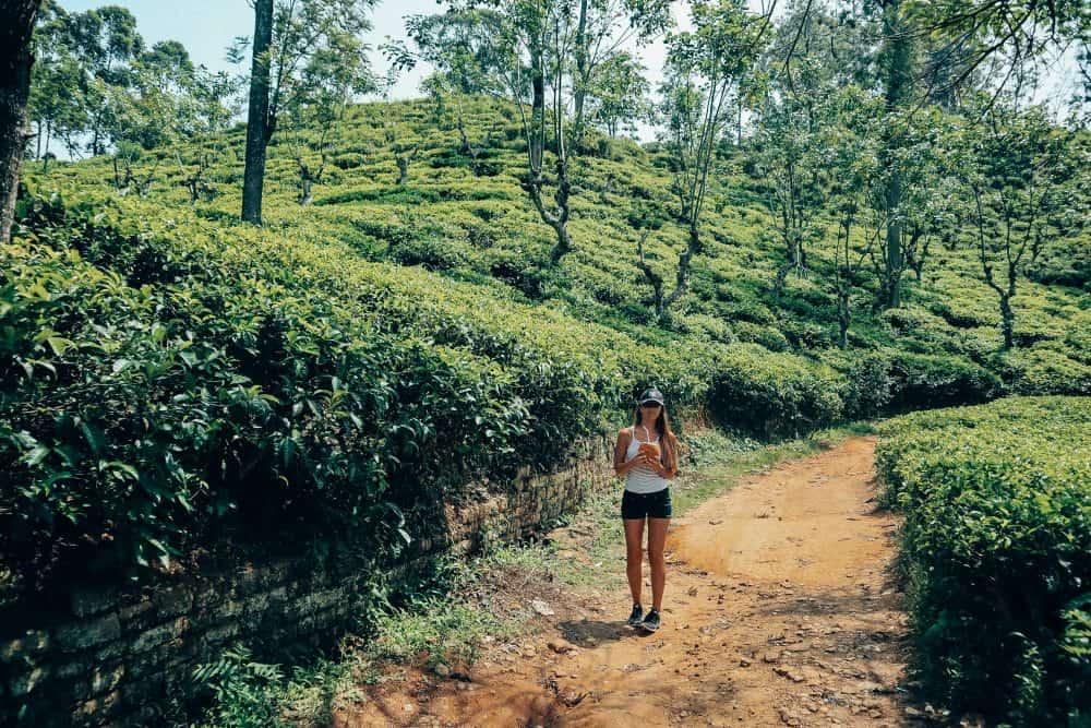 Exploring the tea plantations of Ella