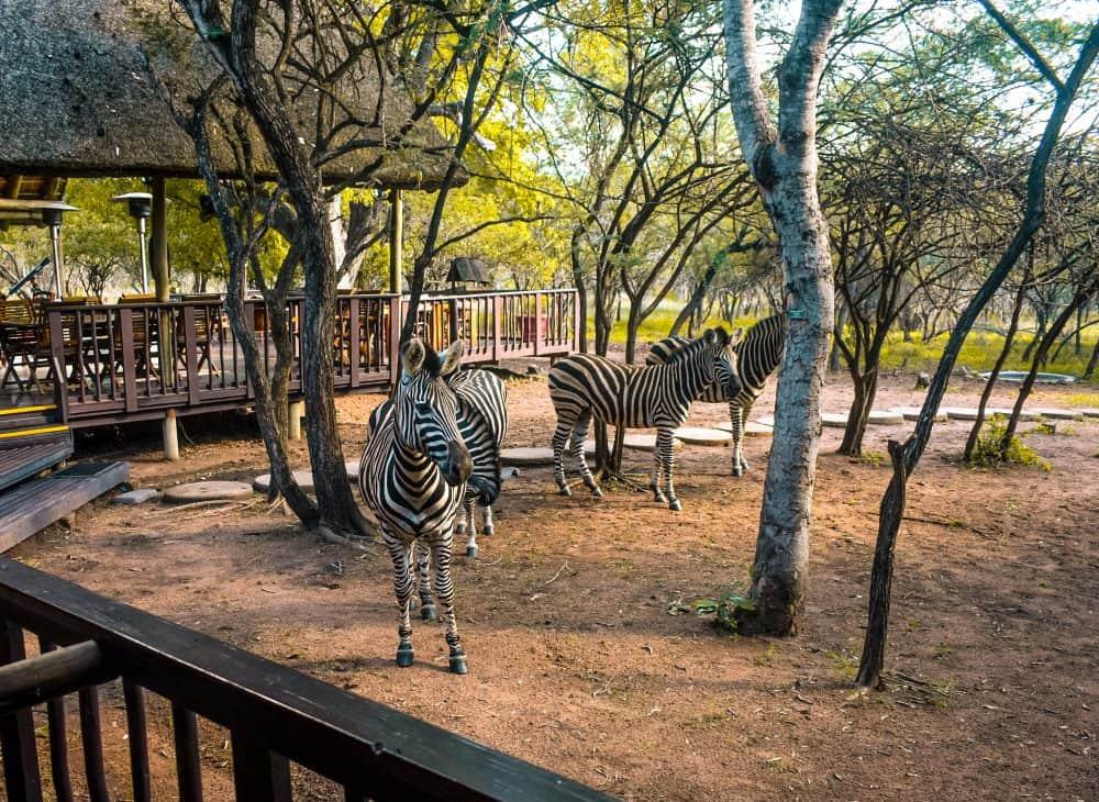 wildlife at Kruger National Park