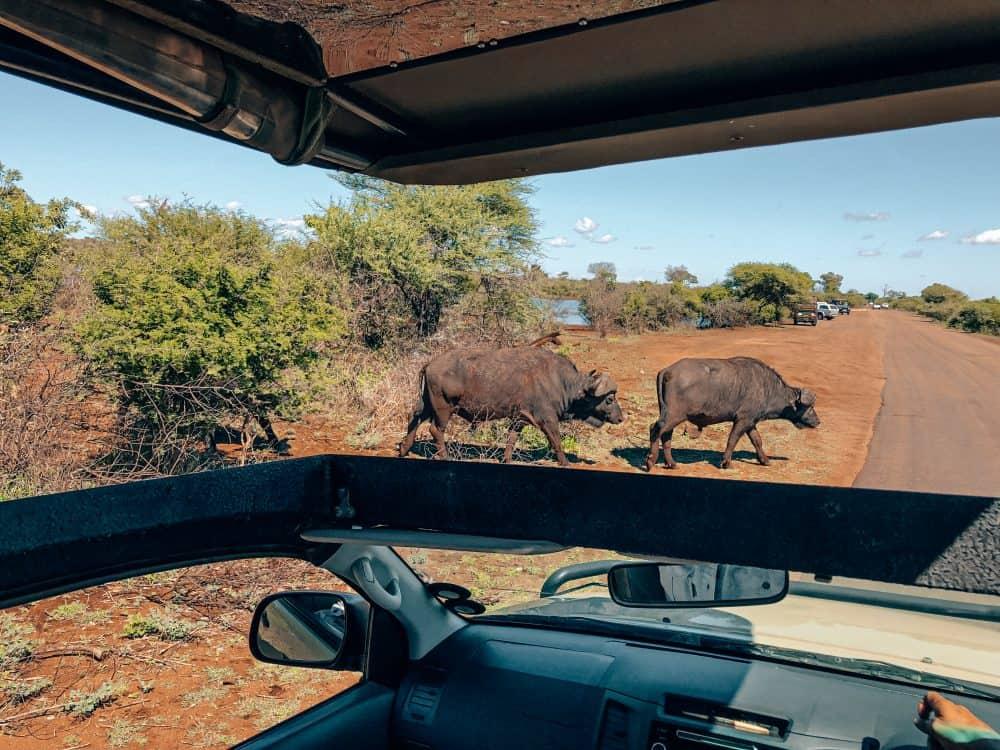 safari at Kruger National Park