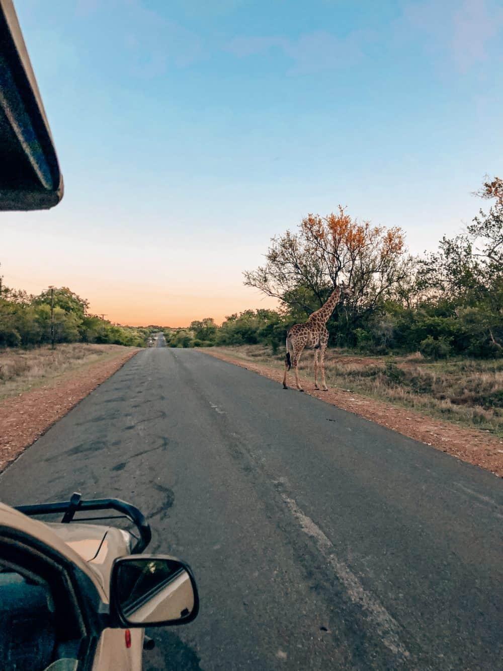 animal sightings at Kruger National Park