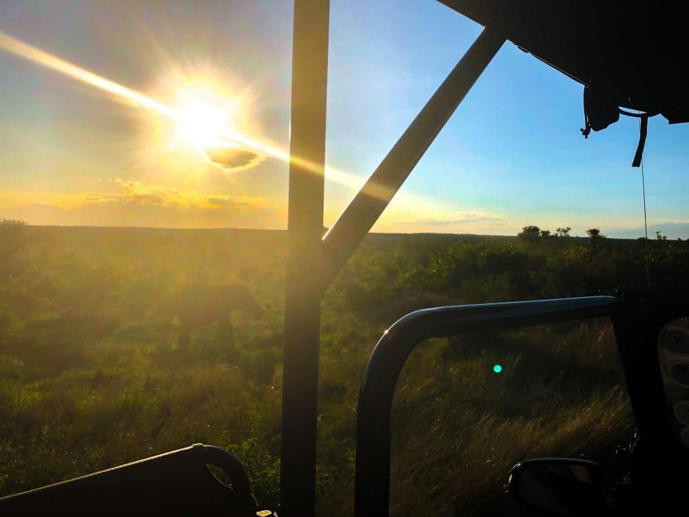 visiting Kruger national park