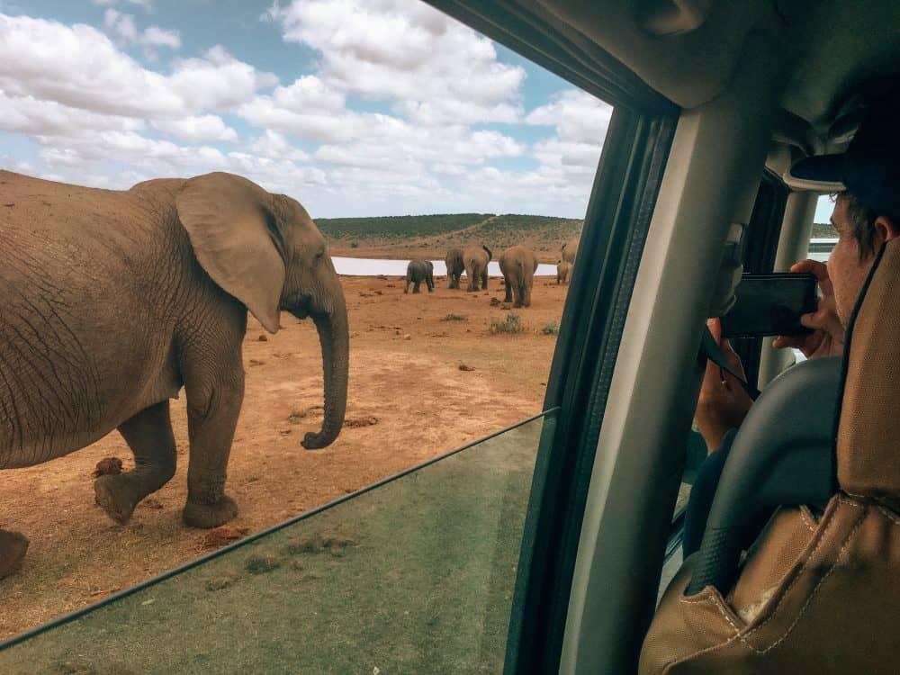 Addo Elephant Park near Port Elizabeth