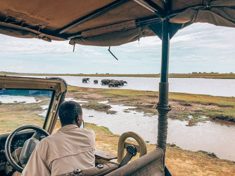 Safari in Chobe National Park in Botswana