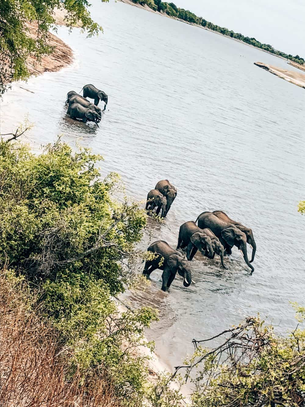 Elephants in the Chobe River, Botswana