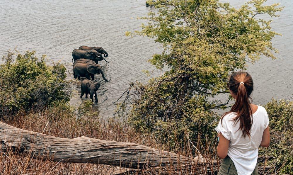 Elephants at Chobe National Park, Botswana