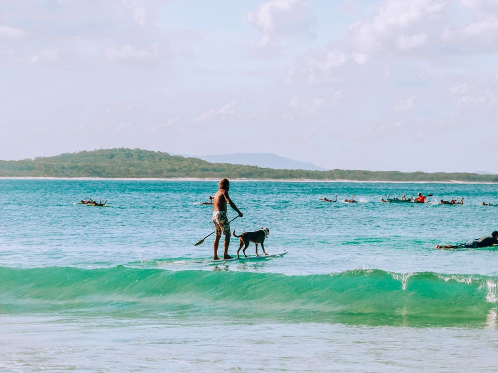 Local surfing dogs in Noosa