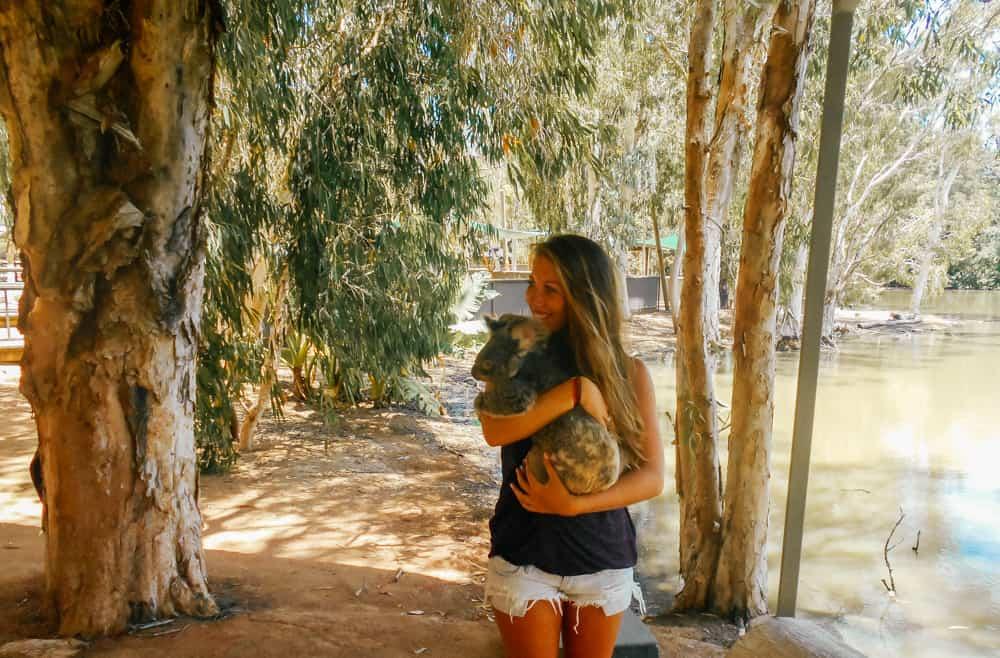 Koalas at the Billabong Sanctuary