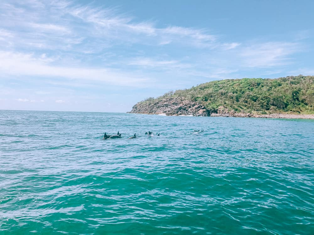 Dolphins in Noosa
