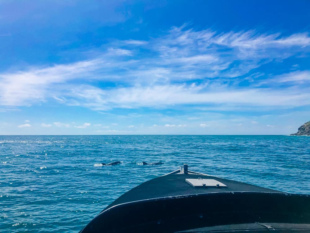 Spotting dolphins from our boat in Noosa