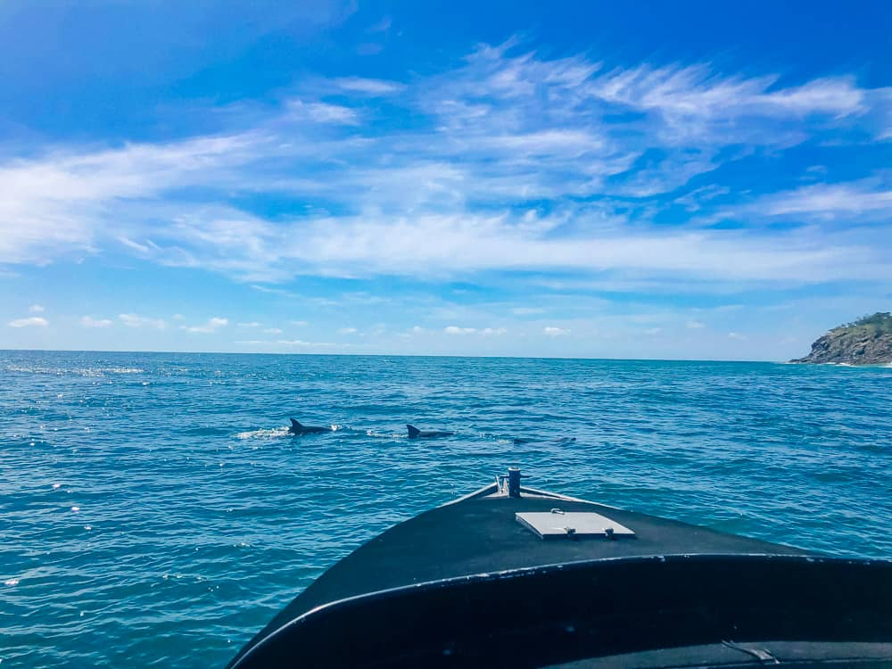 Dolphin watching in Noosa
