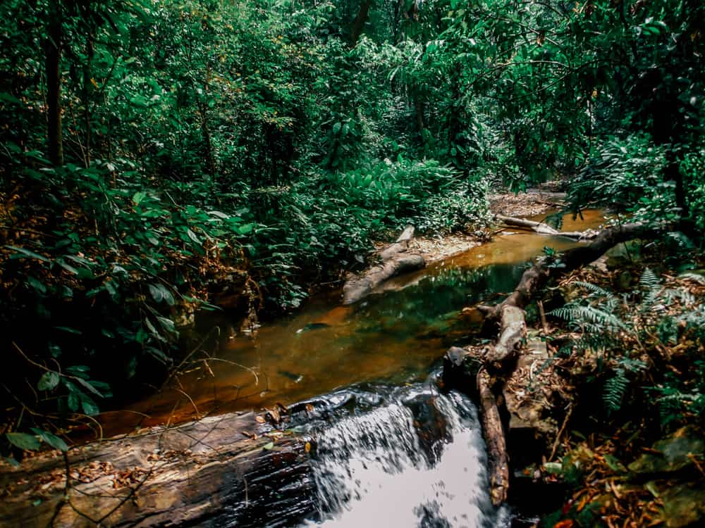 Waterfall exploring in the Volta region