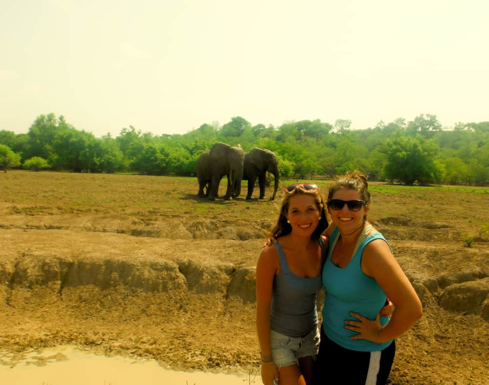 Witnessing the elephants close up at Mole National Park