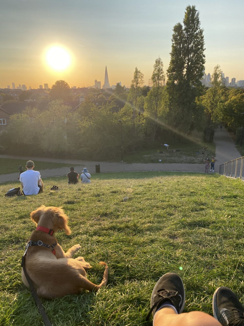 Enjoying the sunset from Stave Hill with my pup