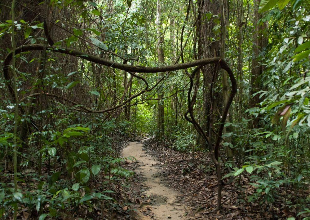 Bukit Timah Nature Reserve near Singapore