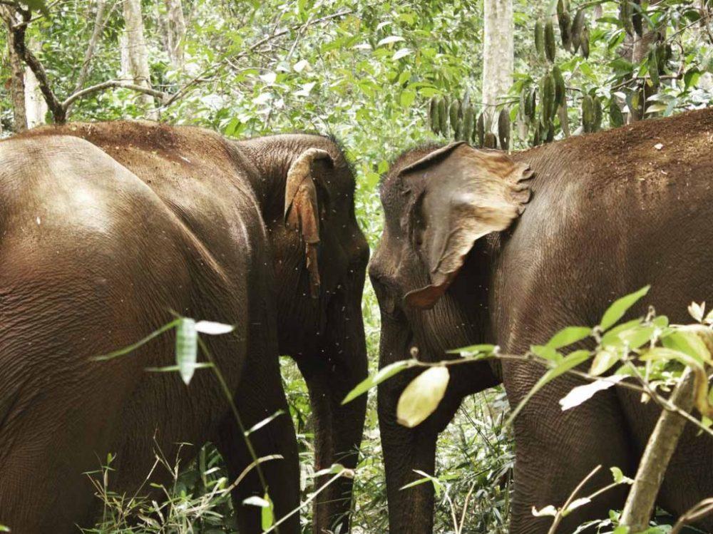 Elephant Valley Project in Mondulkiri