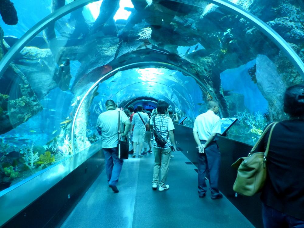 Inside the SEA Aquarium