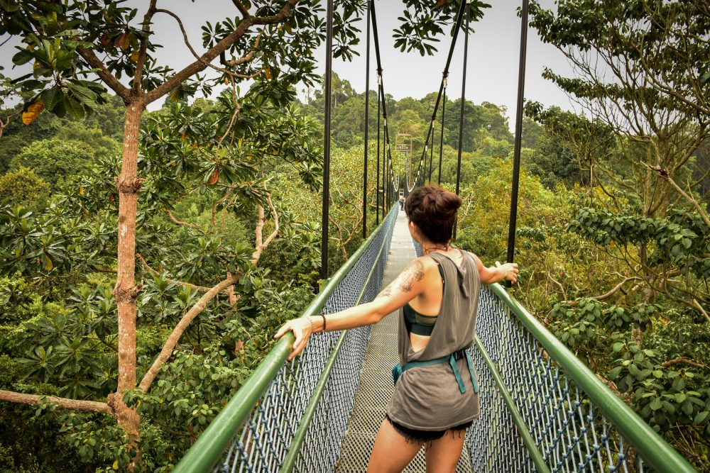 Treetops walk in Macritchie Nature Reserve