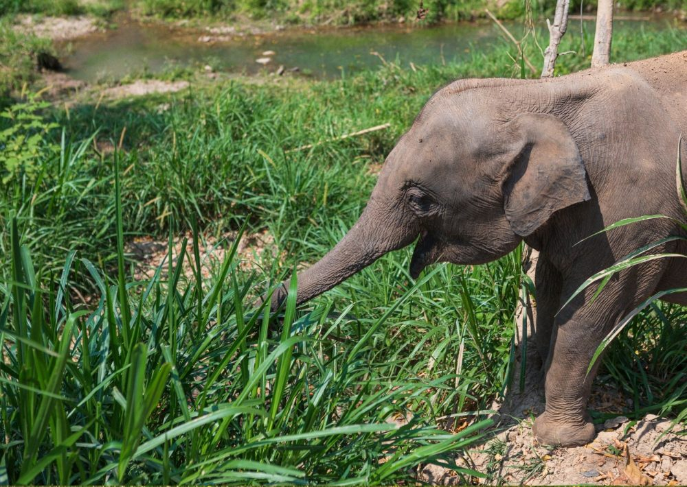 Elephant Nature Park near Chiang Mai