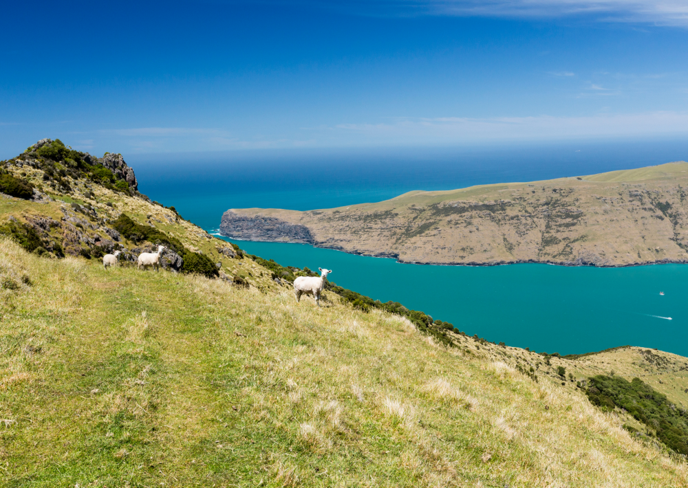 The stunning Banks Track above the Akaroa Harbour