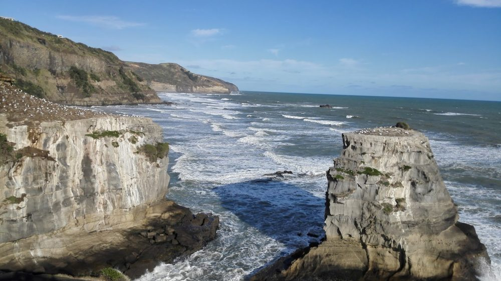 Muriwai Beach & Gannet Colony