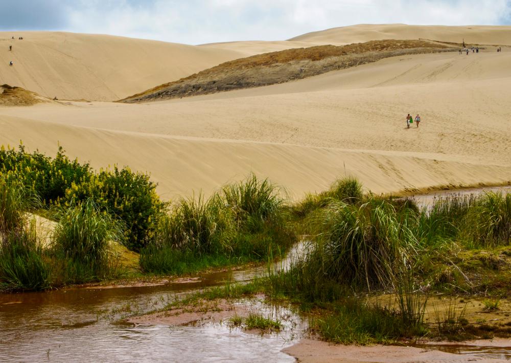 Sandboarding at Te Paki Sand Dunes
